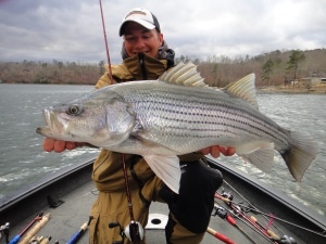 "Gussy with a big striper that fell for a jerkbait during practice.  ""These things fight so hard!"""