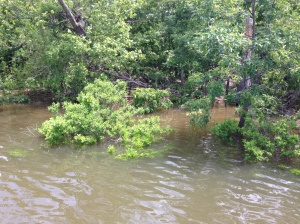 A look at the flooded shoreline of Grand Lake.
