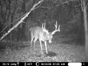 Trail Cam Tactics